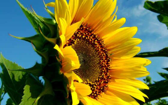 природа, summer, цветы Фон № 176472 разрешение 1920x1200