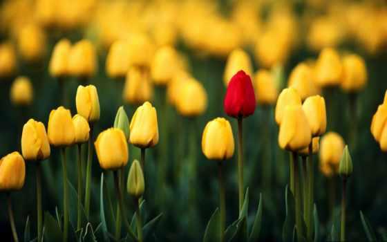flores, bellas, para, блог, enamorar, una, estatus, más, floristería, pinterest,