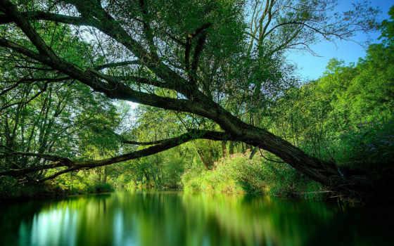 природа, красивые, dreem, лес, pics, дерево,