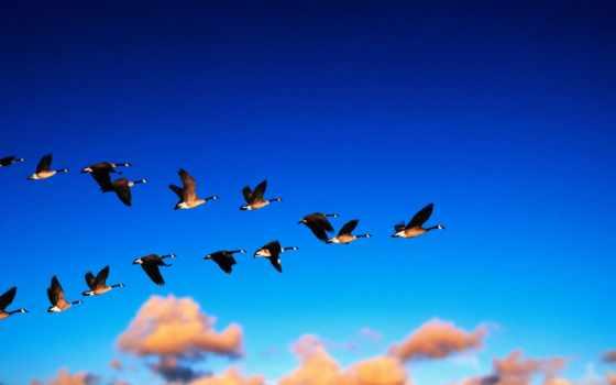 птиц, птицы, весной, весны, стаи, прилета, первыми, park, россии,