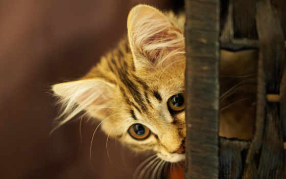 pinterest, cats, animals