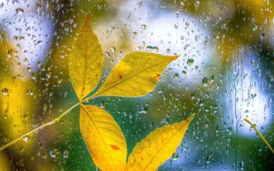 дождь, лист, осень, фотообои, success, rainy, погода, drop, sign