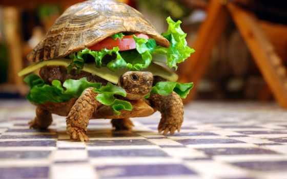 eating,