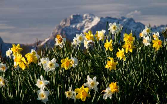 cvety, трава, горы