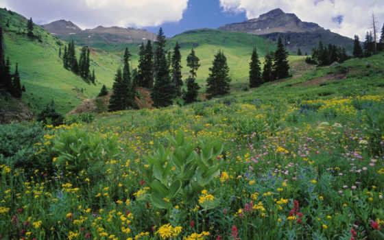луг, зелёный, alpine