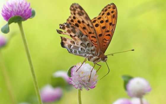 красоты, бабочка,