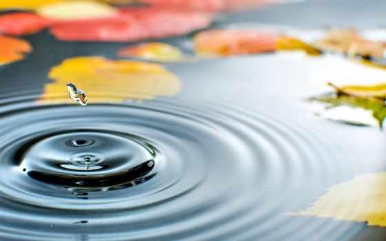 осень, листва, макро, просыпается, день, water, лужа, лужи, drop,