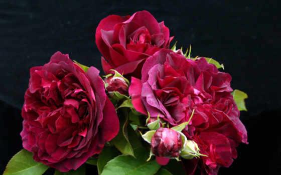 розы, цветы Фон № 32985 разрешение 1920x1280