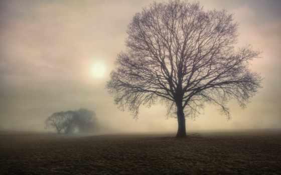 туман, утро, поле