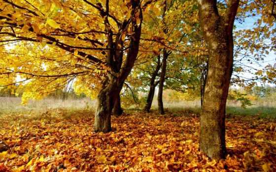 осенние, осень, деревя