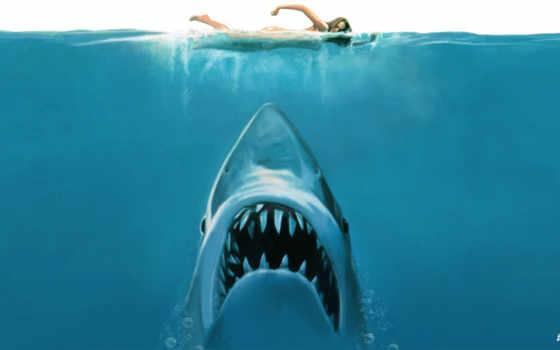 requin, ecran, fonds, fond, attaque, les, tous, images, blanc,