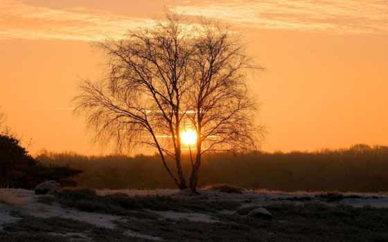 рассвет, winter, trees, sun, дерево, береза,