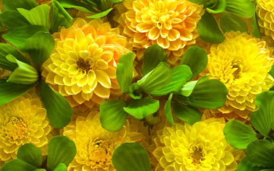 весна, cvety, листва, желтые, зеленые, широкоформатные,