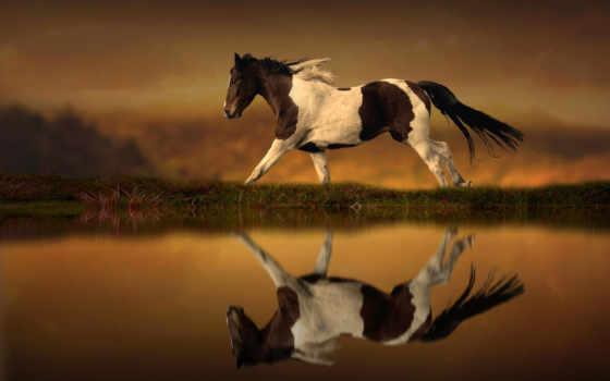 лошади, лошадь, воде, размытом, скачет, fone, водоема, берегу, отражаясь, puzzle,