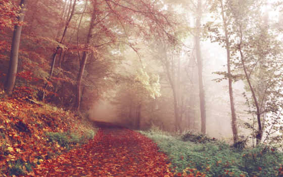 free, природа, stock, фото, images, pexels, лес,