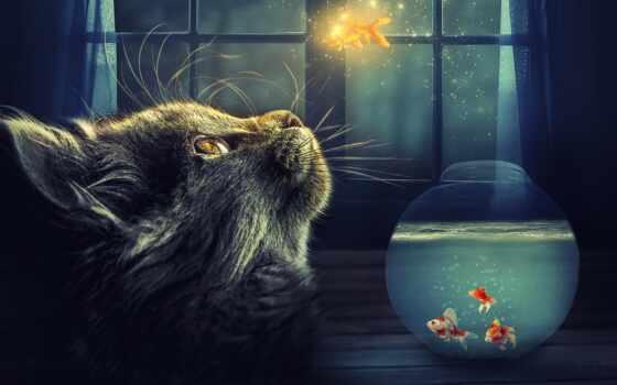 narrow, кот, ретушь, fish, stoloboi, хороший, animal, black