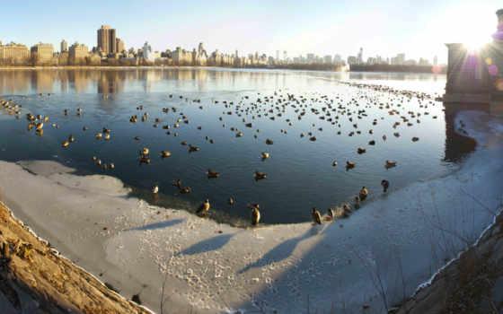 reservoir, park, центральный