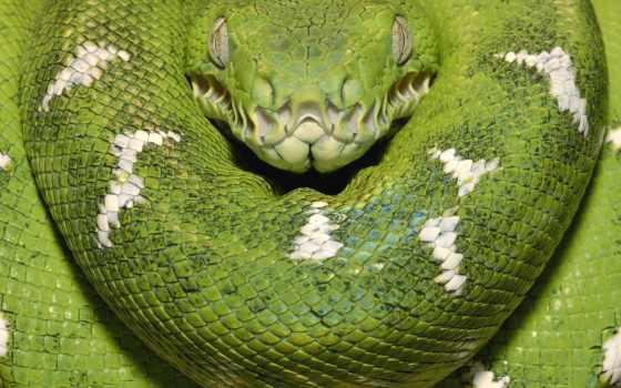 azul, rosa, verde, snakes, quartzo, strong, cobra, para,