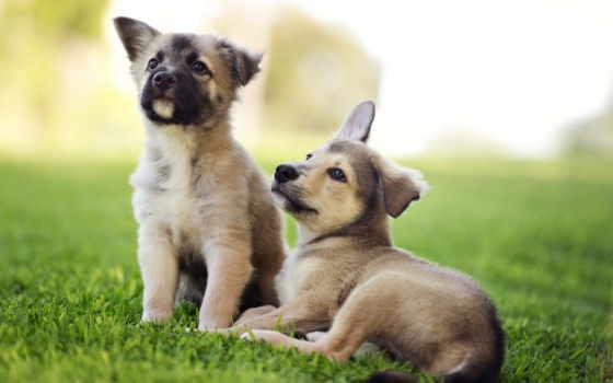 собаки, щенки, щенок, zhivotnye, картинка,