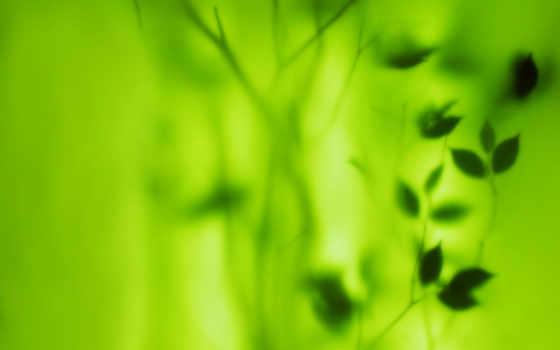 зелёный, текстуры, листва, размытие, фоны, за, текстура, стеклом,