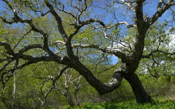 дерево, ветви, зелёный, ветки, summer, art, insta, tsukiko,