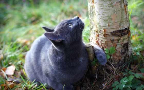 кот, дерево, love, ствол, zhivotnye, land, девушка, луна, cats, трава, шимпанзе,