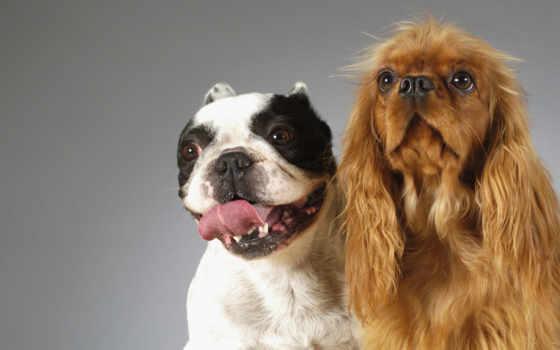 смешные, собаки