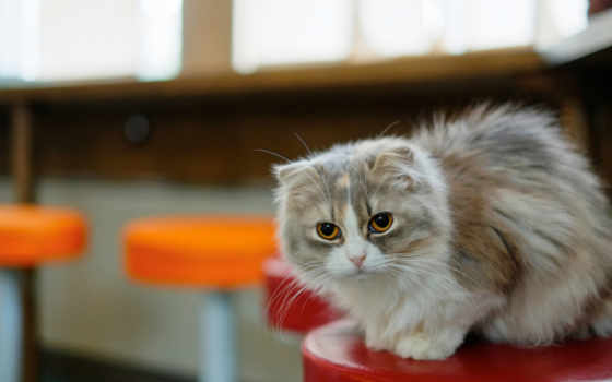 кошаки, кот, микс, красивые, pinterest, charliez, kittens, mine, лежит,