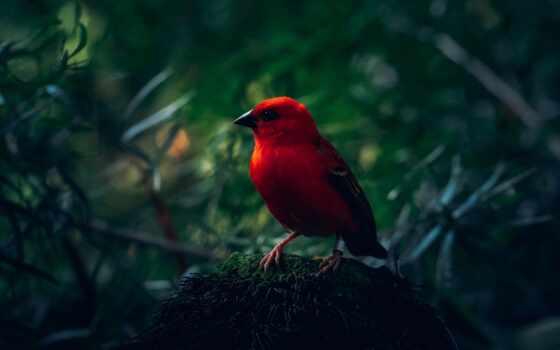 ipad, птица, мини, яркий, pro, parallax, red, air, retina