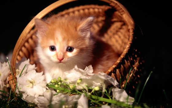 گربه, عکس