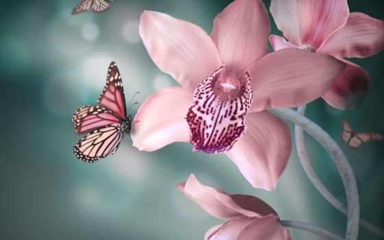цветы Фон № 80709 разрешение 2560x1440