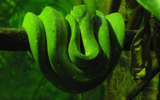 ecran, змей, fonds