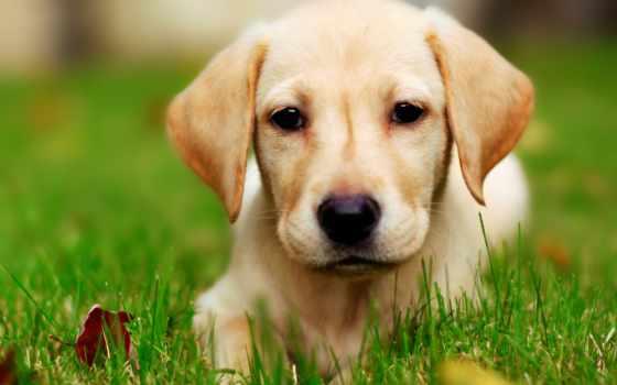 собака, трава, щенок, высоком, качестве, базе, собаки,