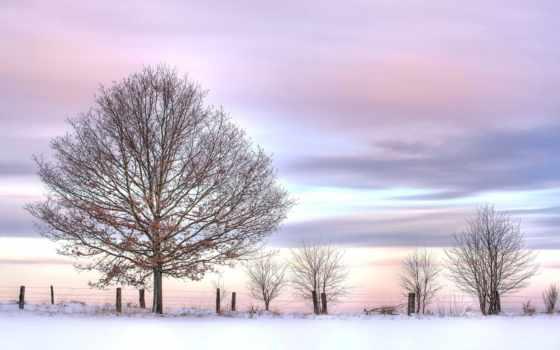 winter, небо, розовое, дерево, снег, кусты, steelscreen,