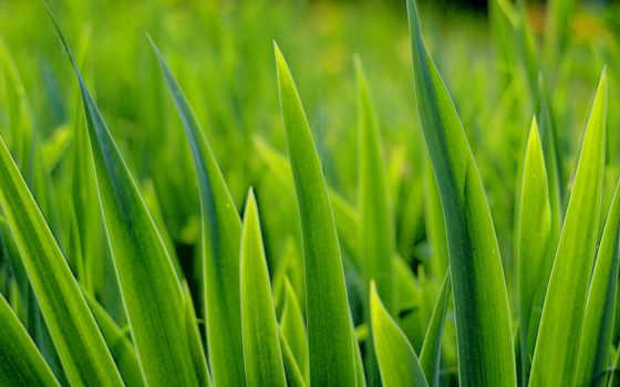 трава, листва, higher