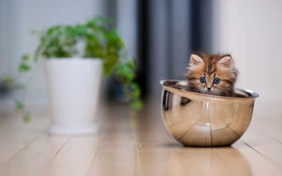 котенок, чашка