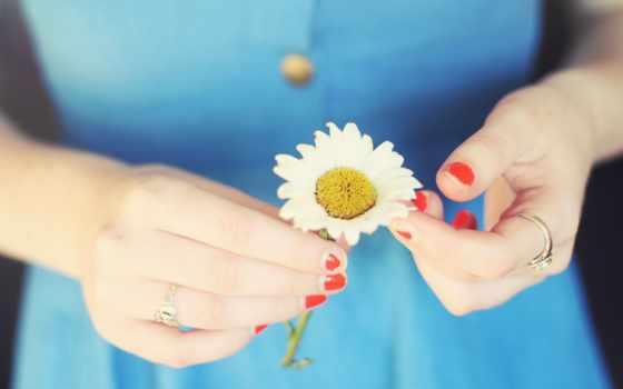 цветы, руки, девушка