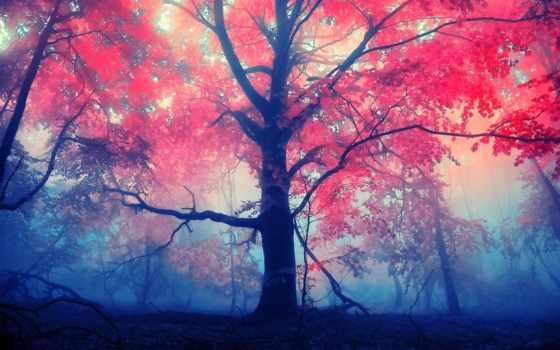 red, листья, дерево, туман,