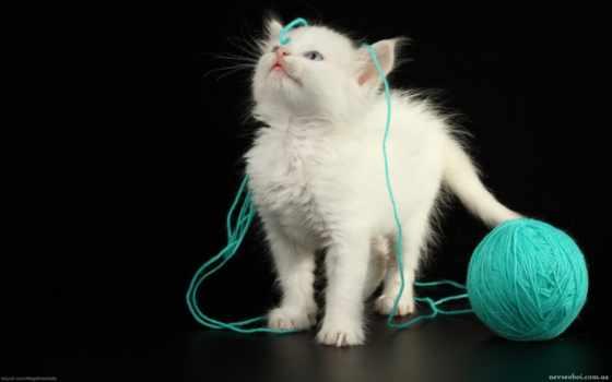 котенок, клубком, ниток, white, разных, кот, играет, разрешениях, кошки, котята,