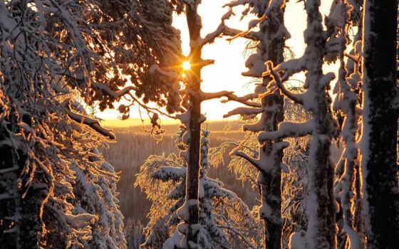 лес, sun, winter, fore, illuminated