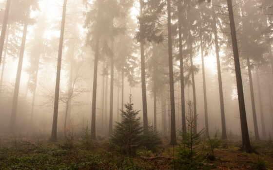 les, туман, дерево, priroda, пейзаж, германии, высокий