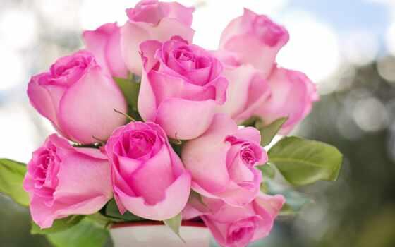 розовый, цветы, роза, букет, женщина, sovet, путь, библиотека, mom