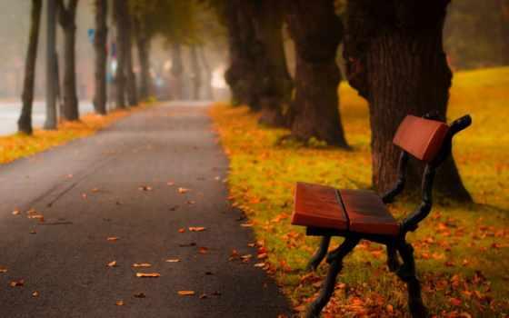 осень, широкоформатные, листья