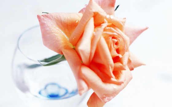 xhtx, flowers