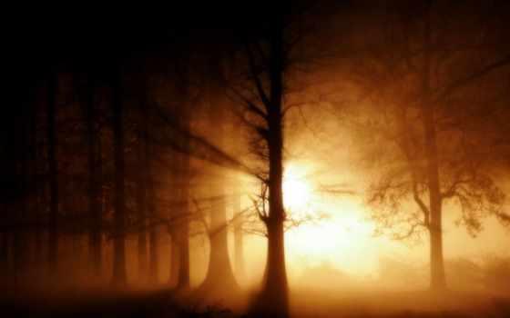 лес, пейзажи -, dark, лесов, normal, свет,