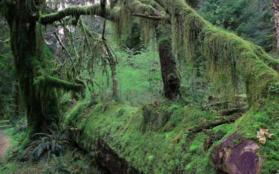 мох, лес, trees, jungle, ствол, чаща,