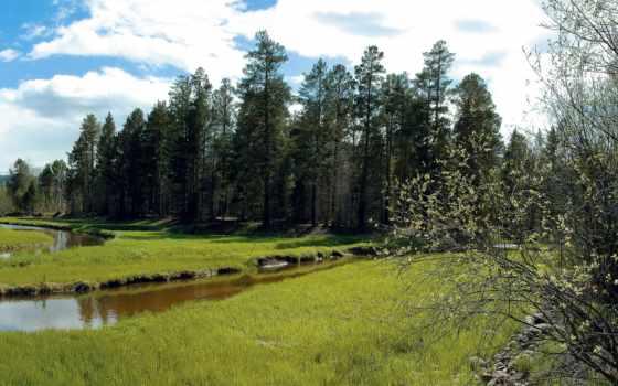 сибири, природа, siberian, пейзажи -, trees, весна,