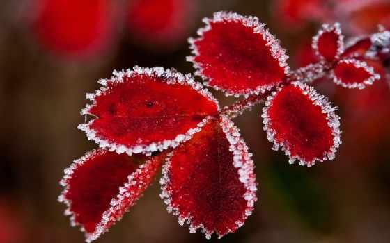 осень, снег, листья,