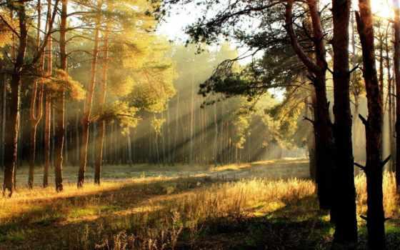 лес, утро, sun, солнца, rising, rays, trees, свет, солнечный,