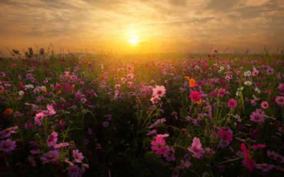 поле, закат, flowers